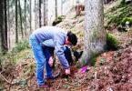 Keltisches Baumritual